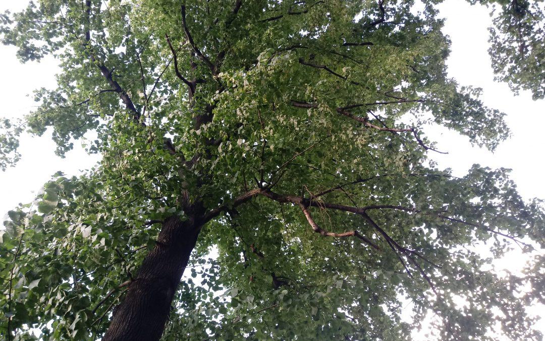 Potrzebujemy drzew, nie kwietników!